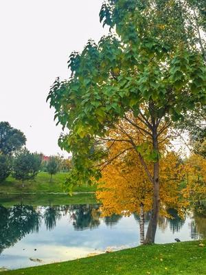 Eskişehir, sonbahara boyandı