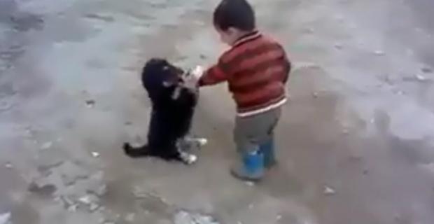 Minik çocukla yavru köpeğin kavgası