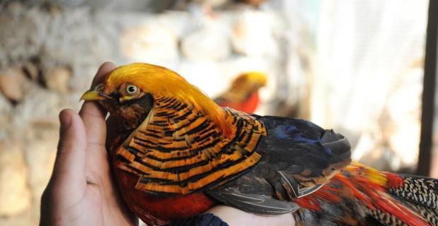 İnşaat işçisinin ilginç kuş merakı