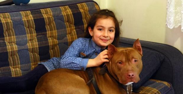 Pitbull ile 8 yaşındaki kızın dostluğu şaşırtıyor