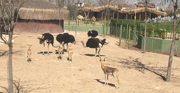 Hayvanat Bahçesi açıldı