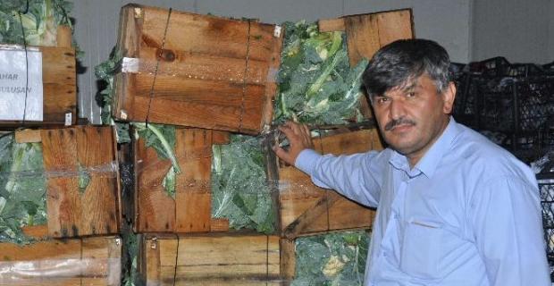 Aşırı yağış sebzeye zarar verdi, ürün çiftçinin elinde kaldı