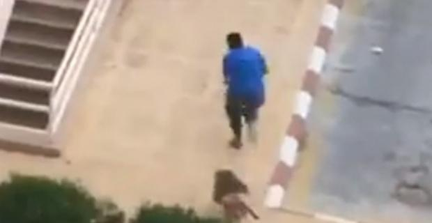 Maymunlar adamı kovaladı