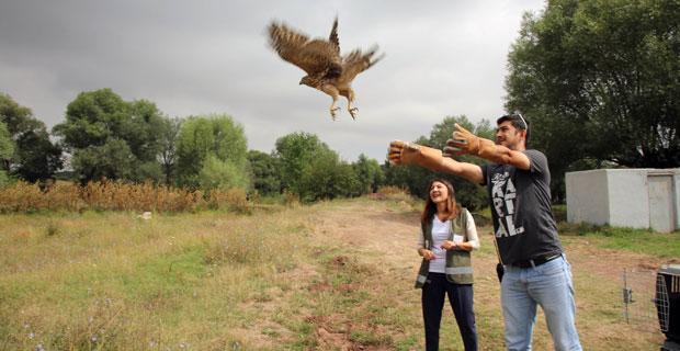 Sağlıklarına kavuşan kuşlar doğaya salındı