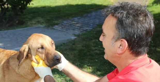 Odunpazarı Belediyesi sokak hayvanlarına aşılama yaptı