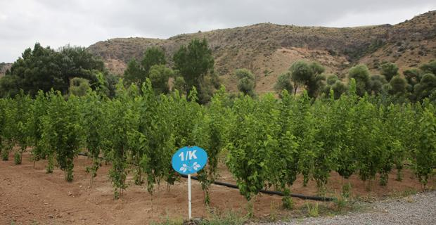 Tohumlar fidana fidanlar ağaca  dönüyor Eskişehir'de