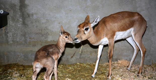 Eskişehir Hayvanat Bahçesi'ne Yeni Yıl hediyesi