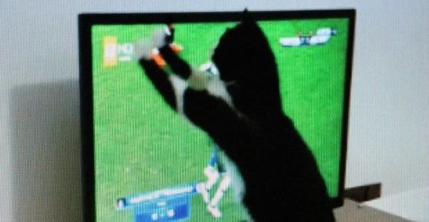 """""""Kedi Feyyaz""""ın derbi heyecanı"""