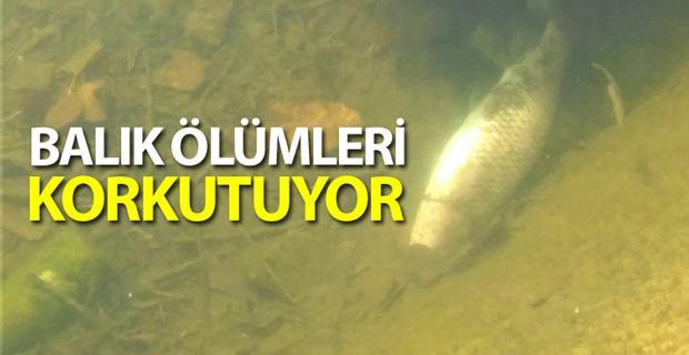 Eskişehir'de korkutan balık ölümleri