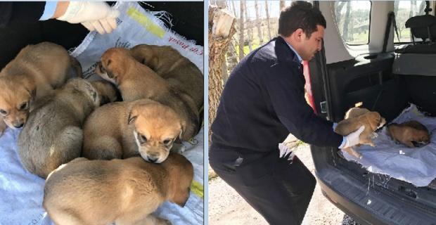 Yavru köpekleri çuvalın içine koyup ölüme terk ettiler