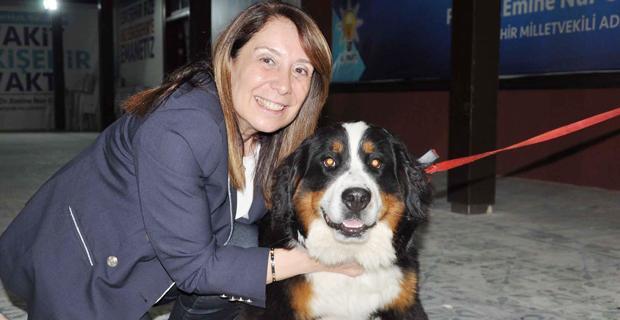 Prof. Dr. Günay, köpeğinin kardeşini Eskişehir'de buldu