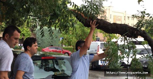 Fırtına ağaçları devirdi, araçlara zarar verdi