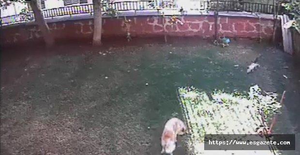 Yavruları için kendisini tehlikeye attı