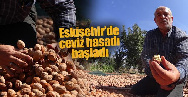 Eskişehir'de ceviz üreticisi taktik değiştirdi
