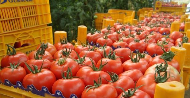 En çok artan domates, en çok düşen limon