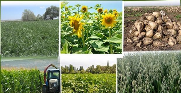 Eskişehir'de sertifikalı tohum üretimi ve kullanımı yaygınlaşıyor