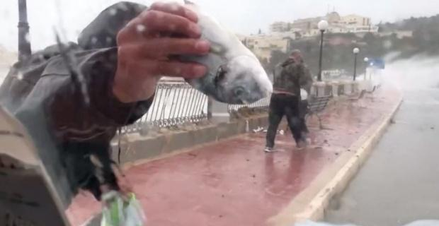 Fırtınada balıklar karaya vurdu