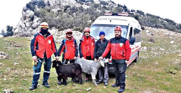 Kayalıklarda mahsur kalan 2 keçi kurtarıldı