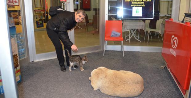 Köpek, kedi dayanışması!