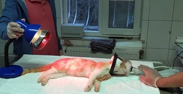 Öldü sanılan kedinin inanılmaz kurtuluşu