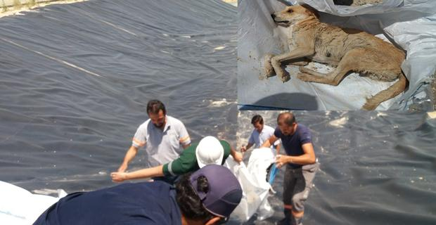 Baraj inşaatında mahsur kalan köpek kurtarıldı/Kütahya