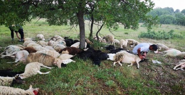 55 koyun yıldırım sebebiyle telef oldu
