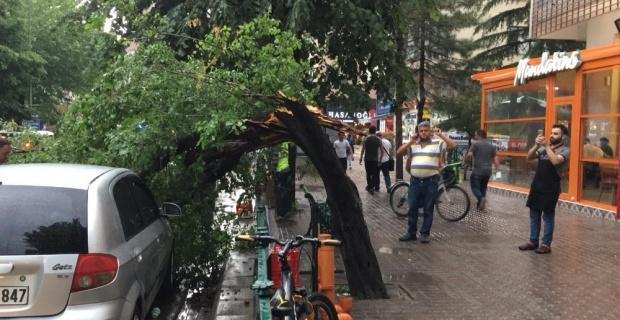 Etkili yağmur ağaçları devirdi
