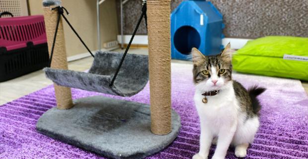 Kedi otelinde bayram rezervasyonları doldu