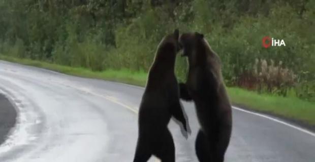 Kanada'da iki ayı birbirine girdi