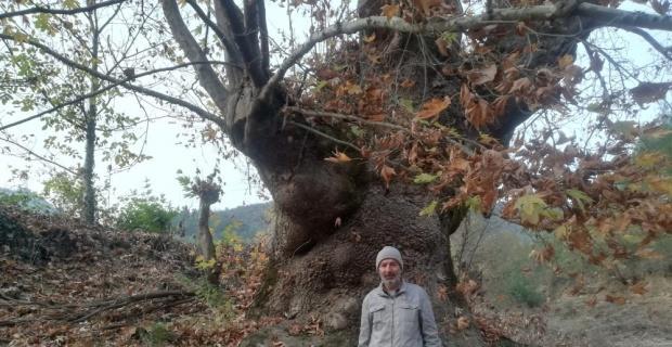 Bu ağacı görenler şaşırıyor