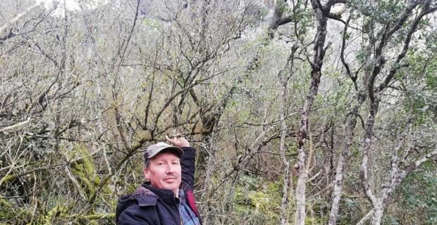 Osmaneli'ndeki ormanlar tehlike altında