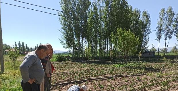 Afyonkarahisar'da tarım arazilerini don vurdu