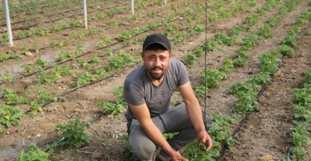 Sebzeler 1,5 ay önceden hazır