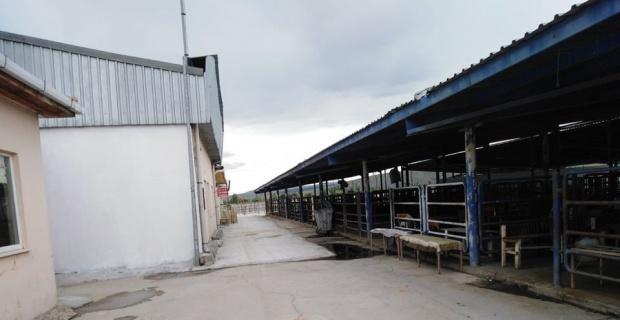 Afyonkarahisar'da hayvan pazarları yeniden açılıyor