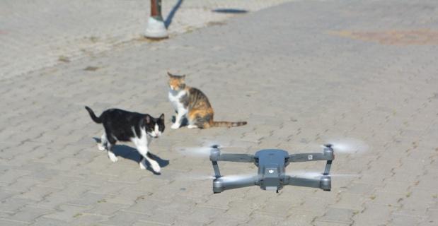 Meraklı kedilerin drone ilgisi