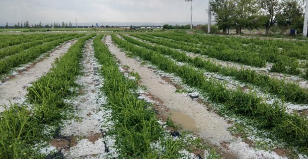 Şiddetli yağış ve dolunun tarıma etkileri