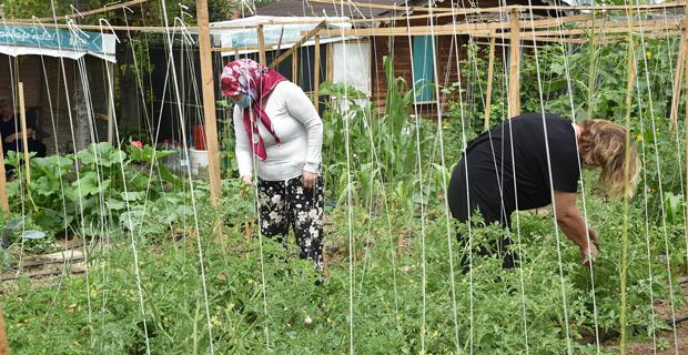 Üretmenin keyfi gönüllü bahçelerinde