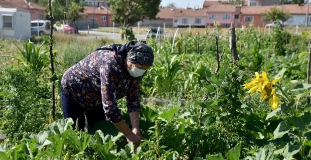 Vatandaşları toprakla buluşturan Esentepe Mahalle Bahçesi beğeni topluyor