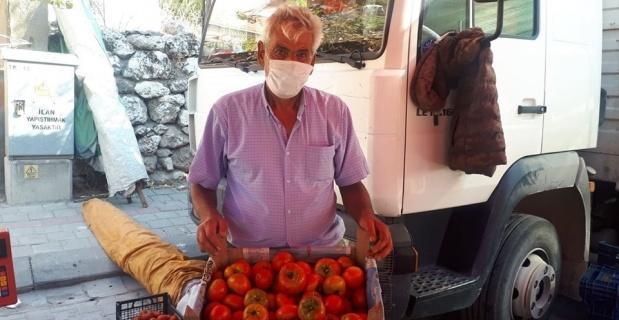 100 yıllık ata tohumu ile yerli domates üretiyor