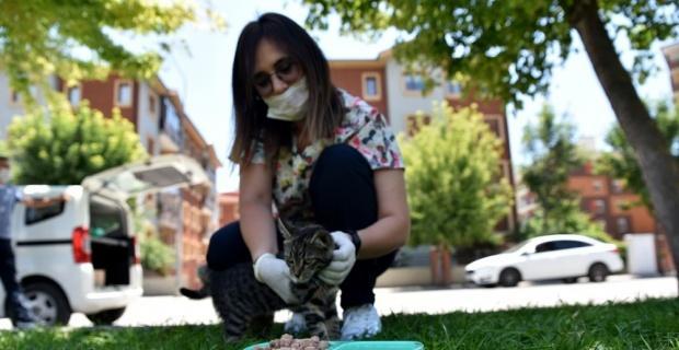 Sokak hayvanları için bir kap su bir kap mama