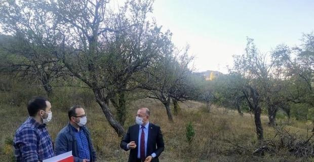 150 yıllık elma ağaçları koruma altına alınacak