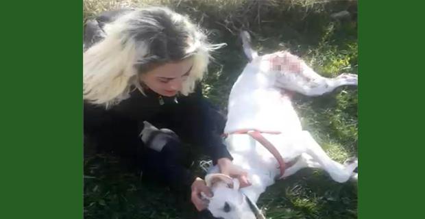Zavallı köpeği kim, neden öldürdü!