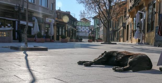Tarihi bölge sokak hayvanlarına kaldı