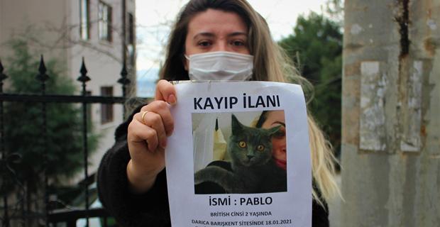 Bu kediyi bulan bin 500 lira kazanacak