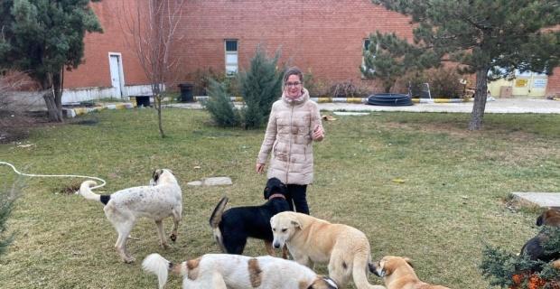 'Büyükşehir sokak hayvanlarına sahip çıkmıyor' iddiası