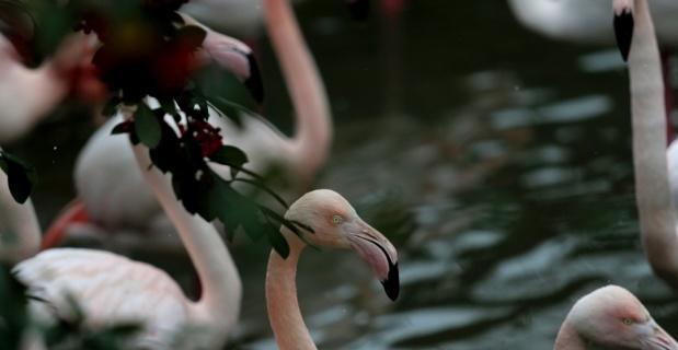 Flamingo ailesine 12 yeni üye