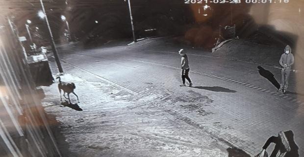 Köpeğin çalınma anı saniye saniye kameraya yansıdı
