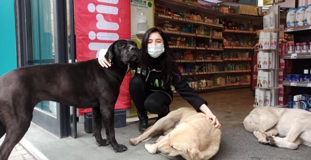 Mağazaya sığınan köpeklere çalışanlar bakıyor