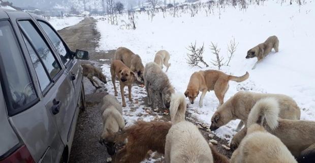 Sahipsiz köpeklere 1 yıldır çöpten topladıkları ekmeklerle sahip çıkıyorlar