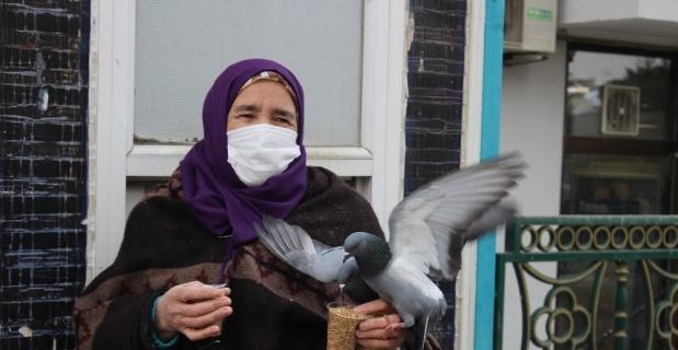 Vatandaşların beslediği güvercinlerin renkli görüntüsü